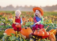 Kids picking pumpkins on Halloween.